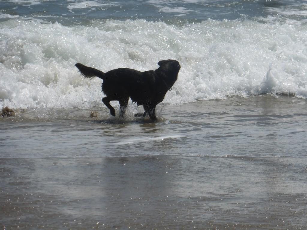 Dog Beach Photography Malibu Style